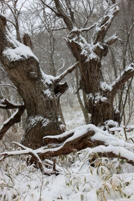 栗太郎の森