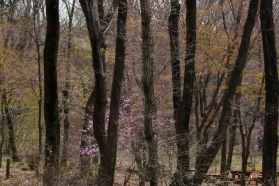 春紅葉始まる