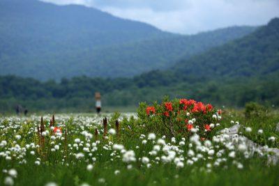 初夏の湿原
