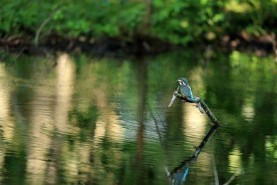 ミズスマシの池